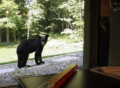 Harford bear on the move in Darlington area