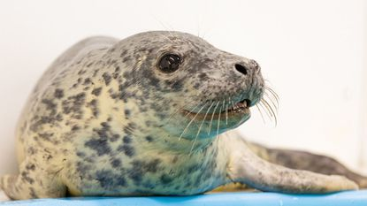 The seal had an unexpected seizure, the aquarium said in a release.