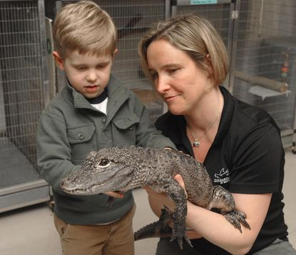Amy Eveleth, who works at the Maryland Zoo in Baltimore, holds a Chinese alligator, Yang, while her son Toby Eveleth, 5, gets a close encounter with the reptile used in the zoo's educational outhreach program. Eveleth travels in the ZOOmobile with several animal ambassadors to inform the public on endangered and threatened species.