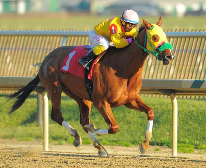 Rapid Redux ridden by J.D. Acosta, wins at Laurel Park on Dec. 13, 2011. It was his 21st consecutive victory and tied the modern United States record of 19 victories in a calendar year. He will retire next week.