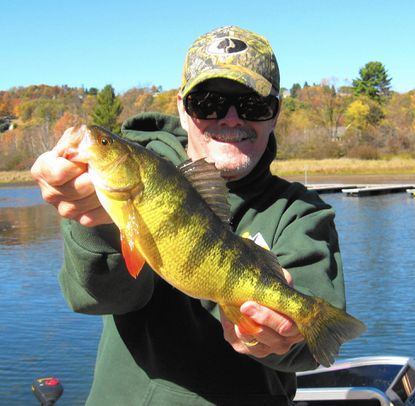 Deep Creek Lake remains one of the top destinations for giant yellow perch. This 14.5 incher hit a #3 Mepps.