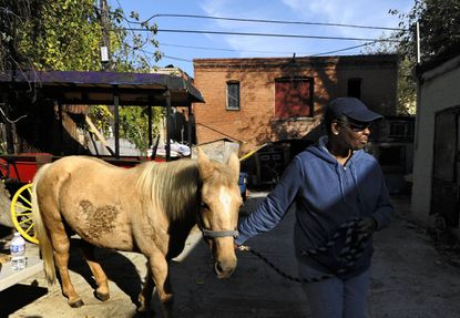 Arabber Dorothy Johns, the owner of Bruce St. Stable, is pictured with Macy, one of her seven horses at the stable.