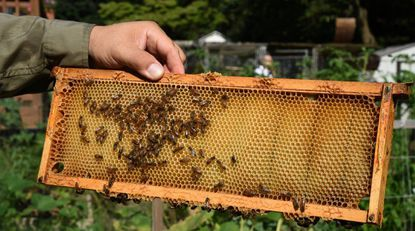 A short course on beekeeping will begin on Feb. 13 through March 20 at the Howard County Fairgrounds on Wednesday nights.