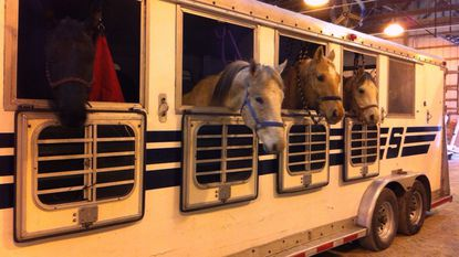 Horses wait on the trailer for shots at a past 4-H Therapeutic Riding Program Horse & Tack Fair. This year's fair is set for Sunday, March 18, from 9 a.m. to 2 p.m. at the Carroll County Agriculture Center's Shipley Arena.