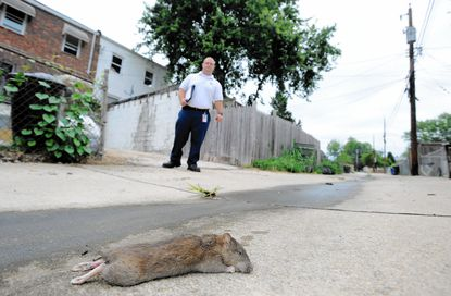Residents turn to homemade concoctions to rid Burkleigh Square of rats