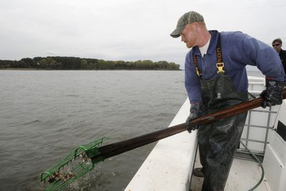 Waterman Rocky Rice uses hand tongs to dredge the bottom of the Potomac river near a proposed development site on which a developer wants to build a 143 slip marina, hotel, conference center, etc., on the shore of what was once a significant oyster bar on the Potomac river.