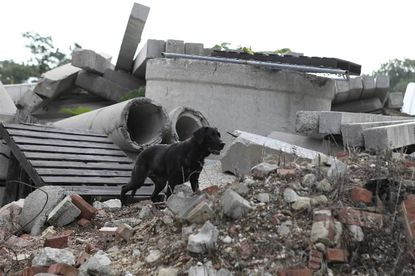 Red, an Annapolis dog helped search for September 11 survivors