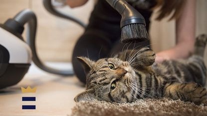 A vacuum cleaner can even be used to clean other cleaning tools. Run the vacuum hose over a broom's bristles to remove dirt, hair strands and tangled fabric threads.
