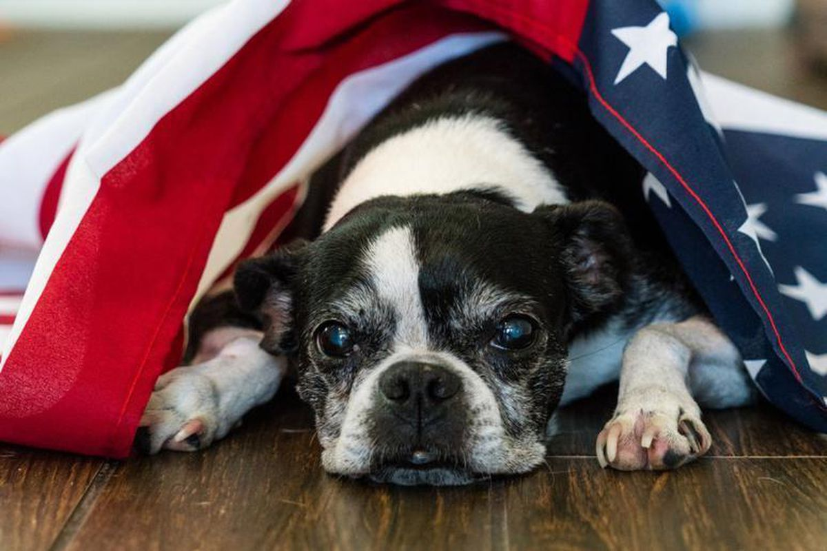 How to help and protect your pets during fireworks