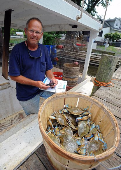 Licensed crabber Richard Young is among the first to be issued new electronic communication gear -- a text-messaging cell phone -- in a pilot program to rapidly report commercial harvesting of blue crabs data to the Maryland Department of Natural Resources. Young is pictured with the phone and half a bushel of crabs he harvested on a trotline.