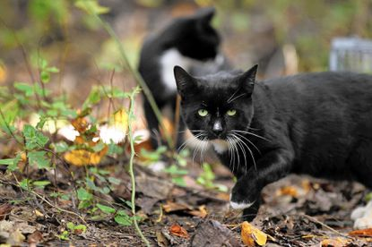 A group of volunteers will be constructing shelters to help outdoor cats weather the winter during a workshop at Partnership Hall Nov. 8.