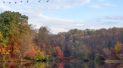 Amateur photographer John Petro, of Columbia, captures an autumn morning at Centennial Lake on Nov. 2 in Ellicott City.