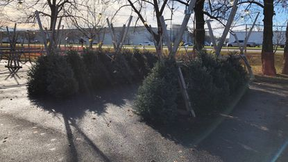 The 40 Fraser firs left on Monday were down to 43 by Wednesday, but the Bel Air Lions Club is expected delivery Saturday morning of 150 Douglas firs, 8 to 9 feet tall. It will be their final delivery of the season.