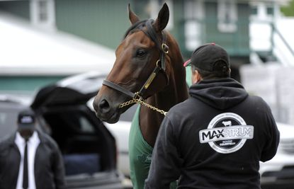 Kentucky Derby winner Nyquist stands with Fernel Serrano, hotwalker, as he gets a bath outside the Stakes Barn at Pimlico Race Course on Wednesday morning.