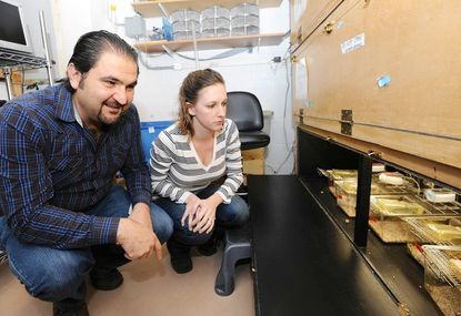 Johns Hopkins researchers Samer Hattar and Tara LeGates check the progress on an experiment involving mice and levels of light.