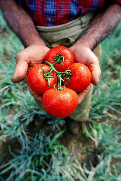 Community supported agriculture is becoming popular in Carroll.
