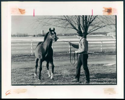 Fifty years later, Northern Dancer's genes still produce winning results