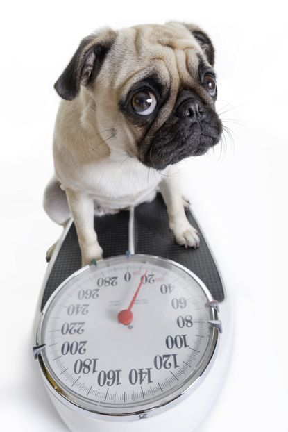 How to curb pets' weight gain