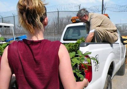 An unidentified inmate at the Patuxent Institution, in Jessup, carries some of the American Chestnut seedlings grown in the institution's greenhouse to Bud Tarleton, a correctional sergeant. The seedlings will be planted by volunteers working with the American Chestnut Foundation.