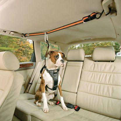 Kurgo zip line dog seat belt: $22.49 at petco.com.
