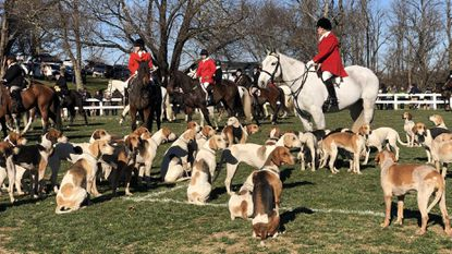 Riders and hounds gather for the annual blessing of the hunt at Saint James Episcopal Church in Monkton on Thursday morning. Generations of foxhunters have come to the countryside church for a blessing on Thanksgiving.