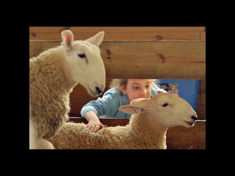 Pictures: Maryland Sheep and Wool Festival - Baltimore Sun