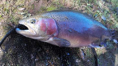 Gronaw: Options aplenty for fall trout