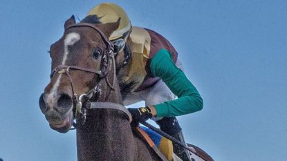 Digest (May 3): Fair Hill-based Alwasysmining continues Preakness preparation