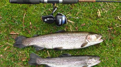 I took this brace of rainbow trout on a 5-foot ultralight outfit and Panther Martin spinner.
