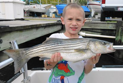 Colten Wallace, age 4, from Middle River landed his first rockfish this past Sunday, fishing with his family aboard the Vista Lady with Capt. Jeff Popp.