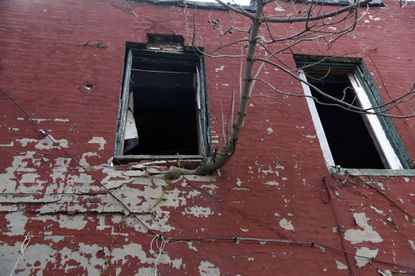 A tree grows through the second floor wall of 1015 N. Carey Street two years ago.