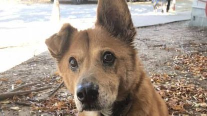 The Baltimore Animal Rescue and Care Shelter (BARCS) is looking for a new home for 17-year-old Trouble.