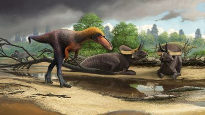 Meet the T. rex cousin you could literally look down on