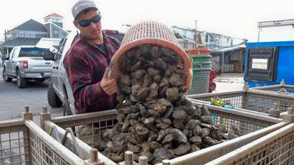 Waterman Chris Tona, of Centreville, drops off freshly harvested oysters at Harris Seafood Company in Grasonville Wednesday afternoon.