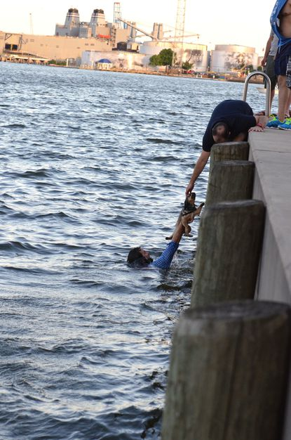 Kayaker rescues puppy from harbor