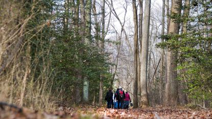 Dozens of hikers march through the Corcoran Woods Environmental Study Area at Sandy Point Park.