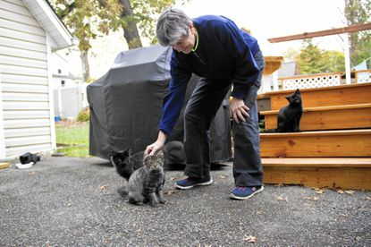 Arbutus resident Mary Deegan pets Gizmo, one of five kittens born in her backyard recently.