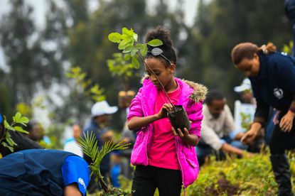 A young ethiopian girl takes part in a national tree-planting drive in the capital Addis Ababa, on July 28, 2019. - Ethiopia plans to plant a mind-boggling four billion trees by October 2019, as part of a global movement to restore forests to help fight climate change and protect resources. The country says it has planted nearly three billion trees already since May. (Photo by MICHAEL TEWELDE / AFP)MICHAEL TEWELDE/AFP/Getty Images ** OUTS - ELSENT, FPG, CM - OUTS * NM, PH, VA if sourced by CT, LA or MoD **