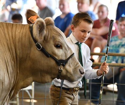 Zach Rose moves his Champion Bred and Owned Crossbred steer around the ring as the bids begin during Saturday's 4-H Livestock Auction at the Harford County Farm Fair.