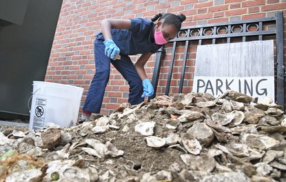 Zaniyah Dailey, 10, a fourth grade student, loads shells into a bucket to move to a pickup truck, Friday April 30, 2021. Annapolis Elementary students donated oyster shells found at a nearby excavation to the Chesapeake Bay Foundation to be used for spat to grown new oysters.
