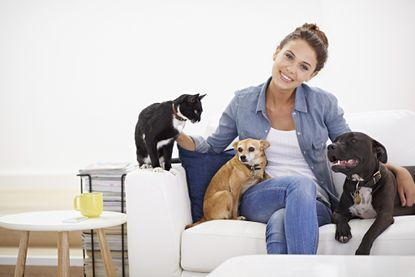 A pet-sitter can be preferable to a kennel in some cases; pets may be  more comfortable in their familiar home environment, and their feeding, sleeping and exercise schedules can be maintained.