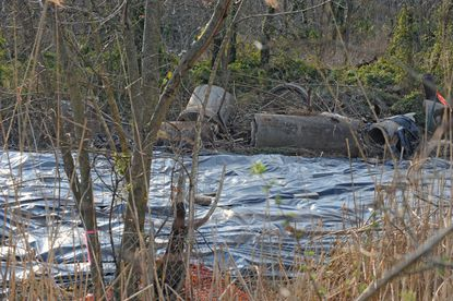 The former Sauer dump in Dundalk, a wooded, marshy site bounded by Lynhurst Road and the Back River, was declared a Superfund site by the EPA because of PCBs, lead and other toxic contaminants.
