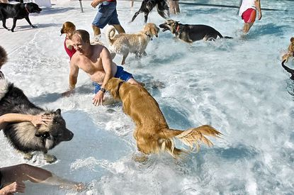 Dog days of summer end with pooch pool party in Ellicott City