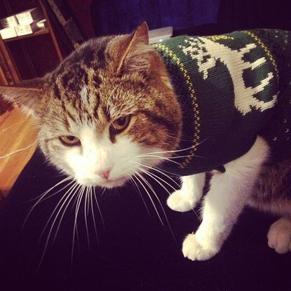 Amorous Hampden cat finds true love -- and a great Christmas sweater