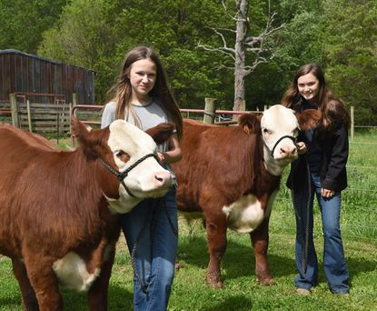 The Partick sisters, Abbie, back, and Kloe lead their Hereford cows Titanic and Olive to their barn Tuesday morning at the Patrick Meadows Farm in Darlington. The sisters are 4-H members and are disappointed that the Harford County Farm Fair has been cancelled because of the coronavirus pandemic.