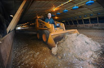 "Farmer cleans out a chicken house between flocks. The ""litter,"" a mix of manure, feathers and wood shavings, is often spread as fertilizer on crop fields."