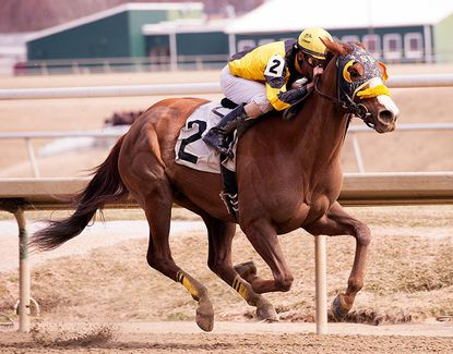 More Than a Cruise rallies in Conniver Stakes at Laurel Park