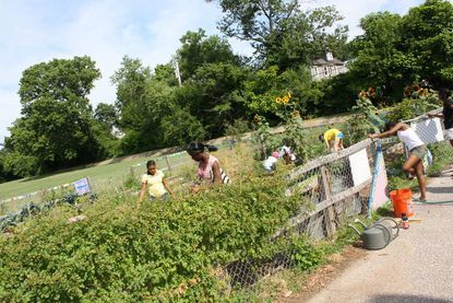 Seventh graders at the Garrison Middle garden