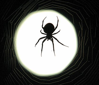 One of the most common of all fears: spiders.
