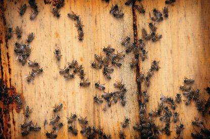 Learn all about beekeeping at the Howard County Beekeepers Association's short course at the Howard County Fairgrounds in February and March.